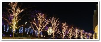 ミッドタウン街路樹
